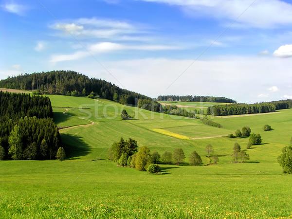 Heuvels hemel bloemen wolken bos natuur Stockfoto © tepic