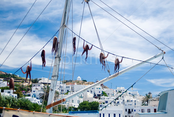 Squid on a greece Boat Stock photo © tepic