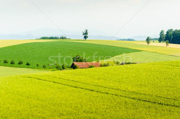 農村 夏 風景 緑 トウモロコシ フィールド ストックフォト © tepic