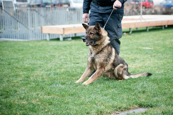 Police chien chien de garde laisse policier sécurité Photo stock © tepic