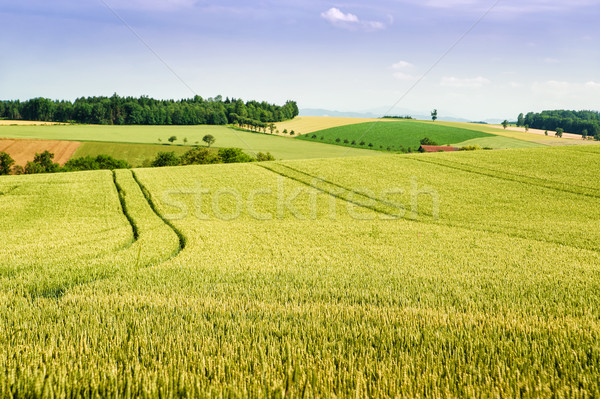Farmland in Upper Austria Stock photo © tepic