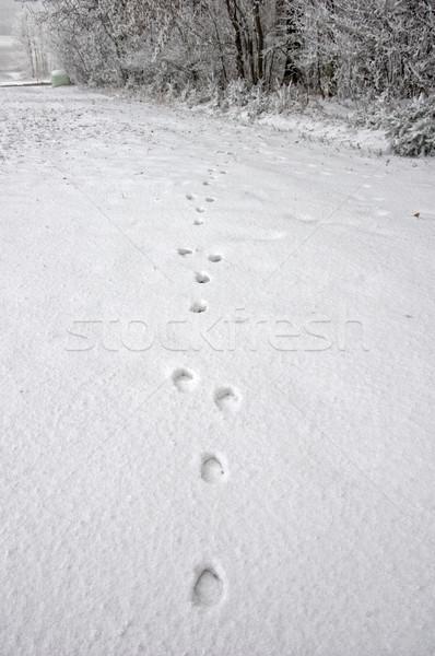 鹿 雪 冬 風景 自然 徒歩 ストックフォト © tepic
