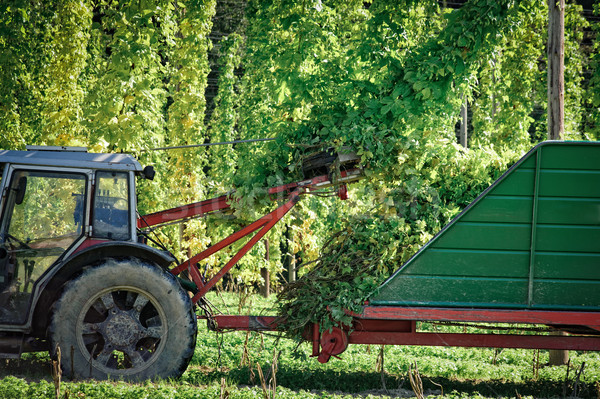 Truck harvesting the Hop Stock photo © tepic