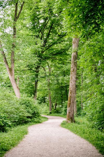 緑 森林 美しい 道路 夏 ストックフォト © tepic