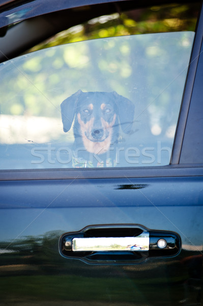 Dog looking through a window Stock photo © tepic