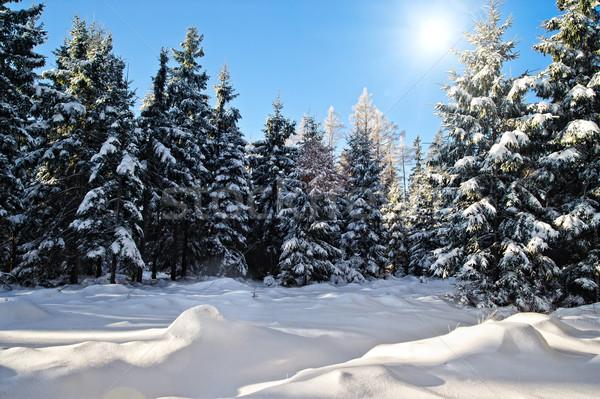 冬 森林 太陽 空 木材 木 ストックフォト © tepic