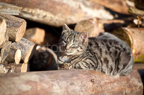 リラックス 猫 木の幹 自然 庭園 ストックフォト © tepic