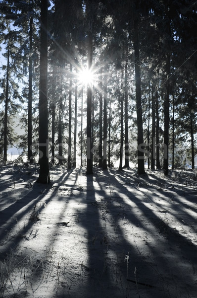 Sunbeam in Winter Forest Stock photo © tepic