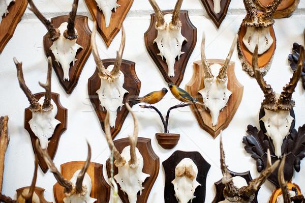 Herten hoofd trofee collectie witte muur Stockfoto © tepic