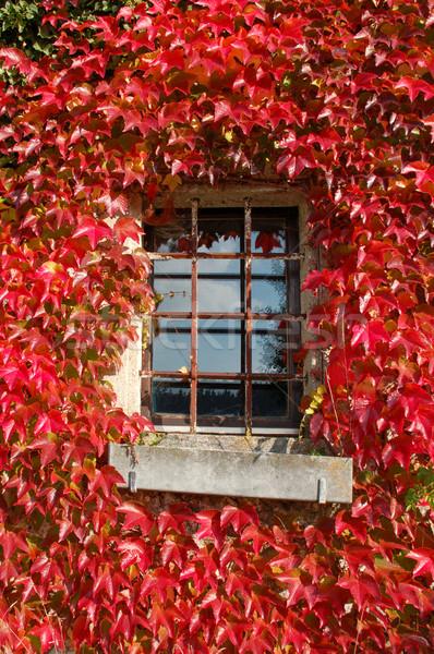 赤 家 フレーム 古い ウィンドウ ストックフォト © tepic