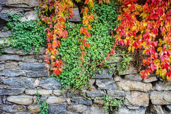 Rock muro diverso colori texture Foto d'archivio © tepic