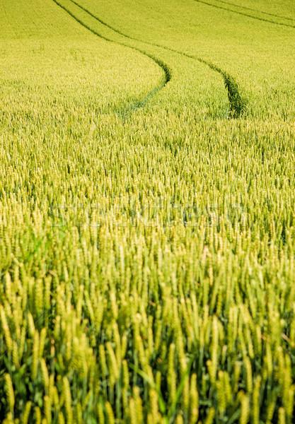 Autógumi útvonal kukoricamező tavasz étel tájkép Stock fotó © tepic