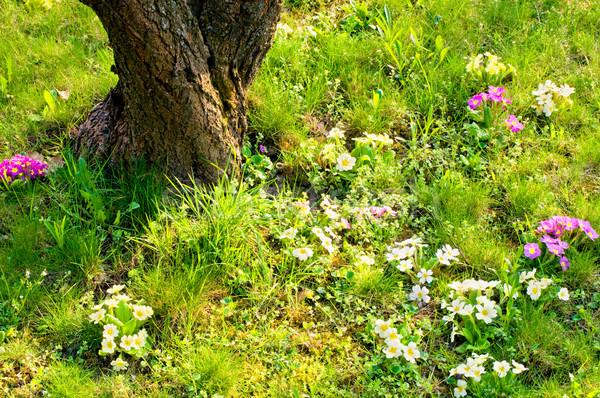 草原 春の花 ツリー 草 庭園 夏 ストックフォト © tepic