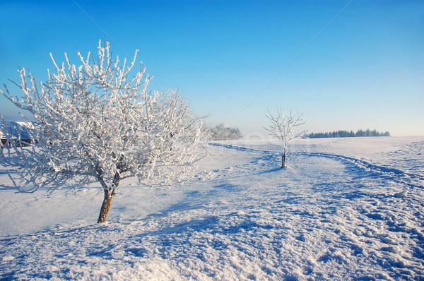 Winter land boom landschap sneeuw schoonheid Stockfoto © tepic
