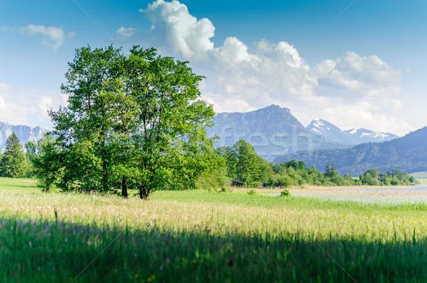 Albero estate panorama cielo natura montagna Foto d'archivio © tepic