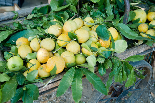 Barrow full with Lemons Stock photo © tepic