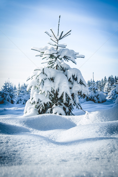 Foresta natura panorama neve inverno Foto d'archivio © tepic