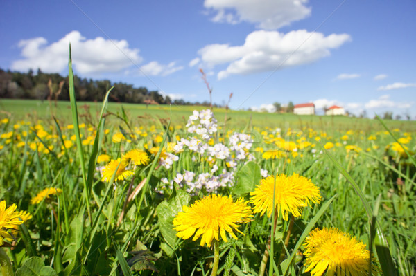 Rural Meadow Stock photo © tepic