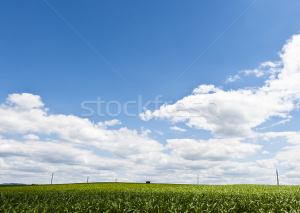 Power Line on a Field Stock photo © tepic