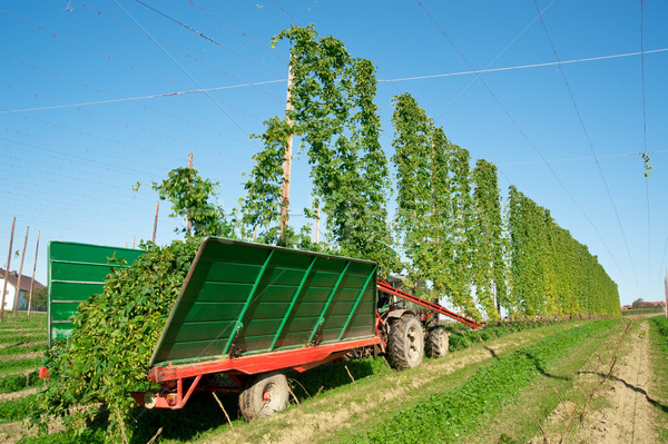 Harvester in a Hop Plantage Stock photo © tepic