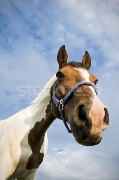 頭 四半期 馬 空 雲 ストックフォト © tepic