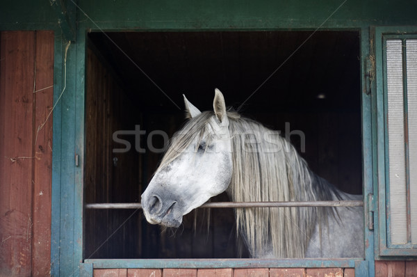 White Horse in a Stable Stock photo © tepic