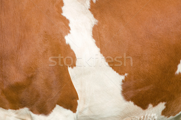 テクスチャ 牛 自然 ファーム 色 ストックフォト © tepic