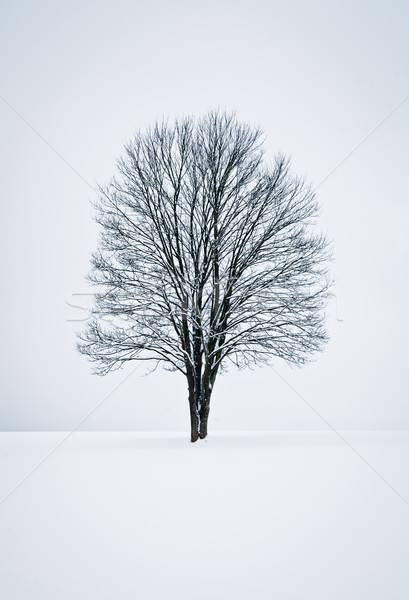 Baum Einsamkeit Winter Landschaft Stock foto © tepic