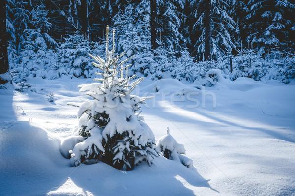 Klein winter boom bos natuur Stockfoto © tepic