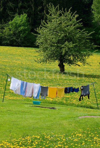 Clothesline in a Spring Field Stock photo © tepic