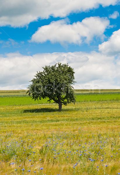 Arbre champ de fleurs maïs printemps herbe forêt Photo stock © tepic