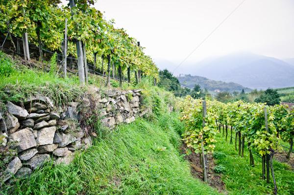 Vid terraza vino naturaleza paisaje rock Foto stock © tepic