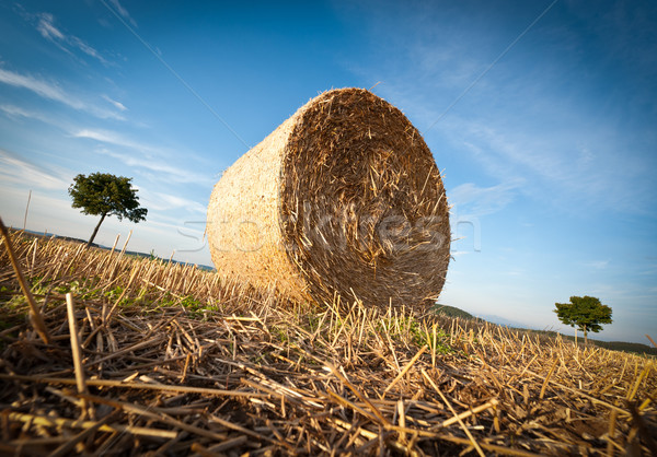 Hay Bale on the late Afternoon Stock photo © tepic