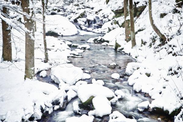 冬 ストリーム 森林 オーストリア ツリー 自然 ストックフォト © tepic