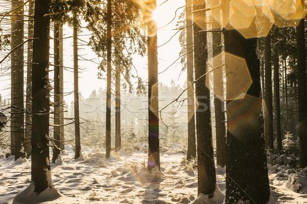 冬 森林 斑 木材 自然 光 ストックフォト © tepic