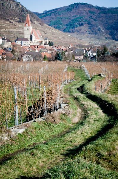 Path through Vineyard Stock photo © tepic