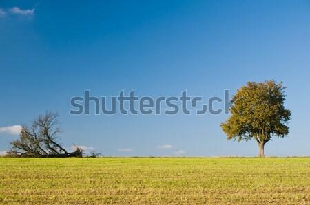 2 異なる 木 1 空 草 ストックフォト © tepic