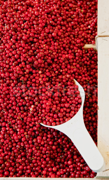 Basket full with Cowberries Stock photo © tepic