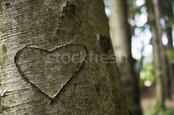 Love Carved on a Tree Stock photo © tepic