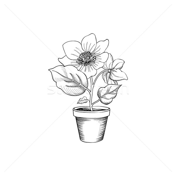 Flower pot engraving. Floral background with flower blossom for  Stock photo © Terriana