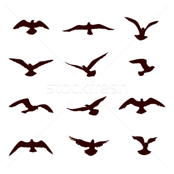Bird flying silhouette set. Wildlife icon collection Stock photo © Terriana