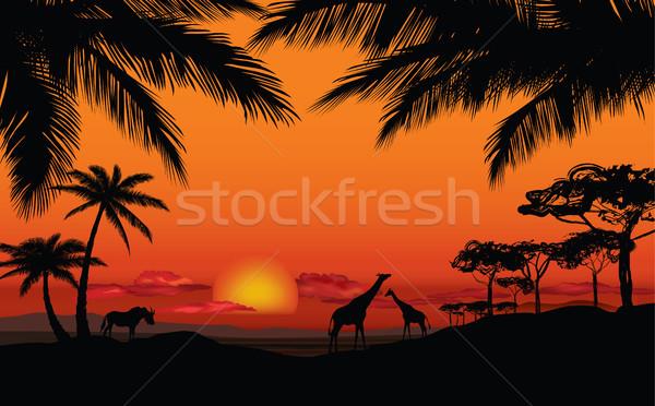 африканских пейзаж животного саванна закат Skyline Сток-фото © Terriana