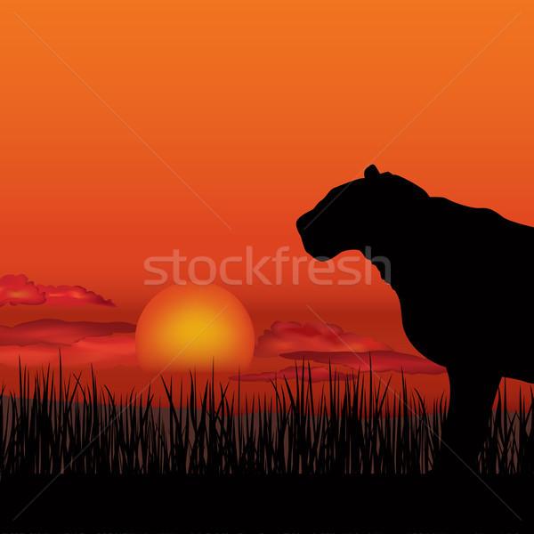 African landscap, animal lioness silhouette. Savanna sunset skyline Stock photo © Terriana