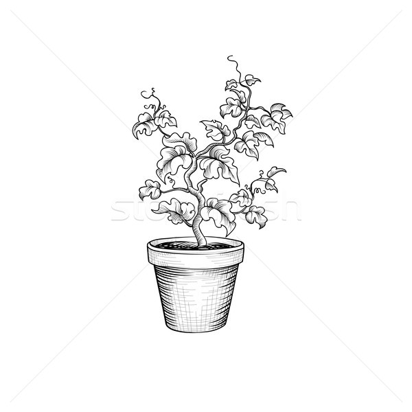 Floral pot. Decorative bonsai tree isolated. Plant with leaves  Stock photo © Terriana