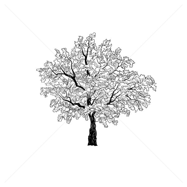 Stock photo: Tree with leaves. Summer nature sign Floral outdoor icon