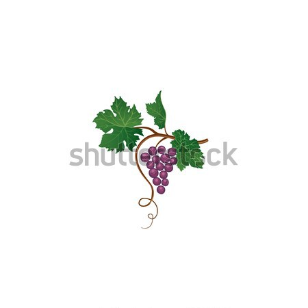 Grape bunch. Floral sign. Garden wine background Stock photo © Terriana