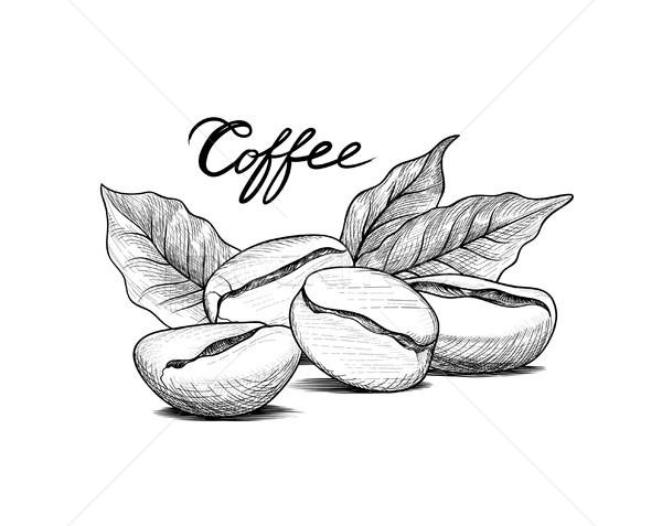 咖啡树图片手绘图简笔画
