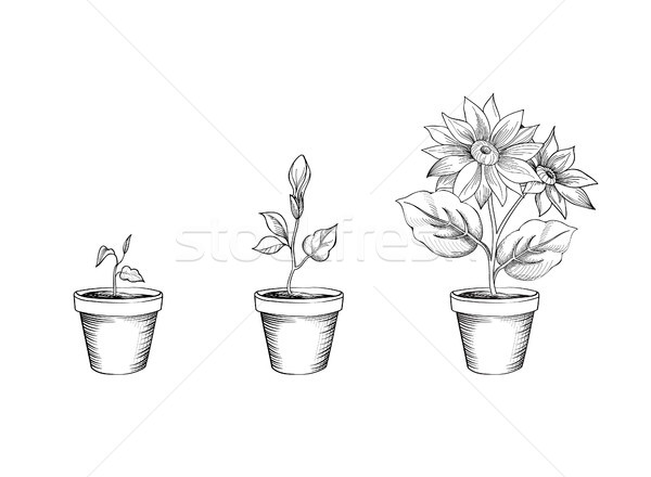 Flower growth set. Floral pot. Plant bloom stages Stock photo © Terriana