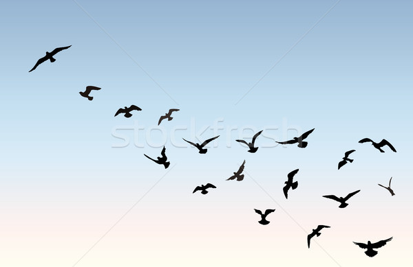 Bird flock flying over blue sky background. Animal wildlife.  Stock photo © Terriana