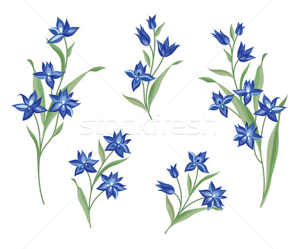 Flor establecer floral ramo verano decorativo Foto stock © Terriana